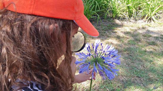 Tema Flora