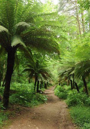 Domingos no Bussaco - A floresta revis(i)tada ...