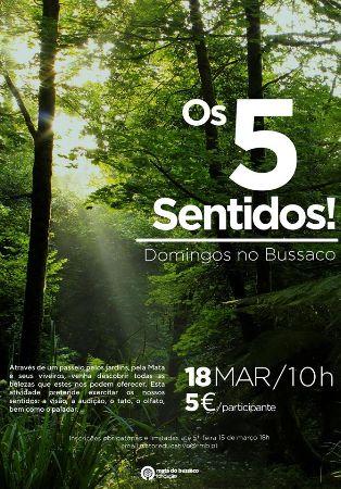 Domingos no Bussaco - Os 5 sentidos