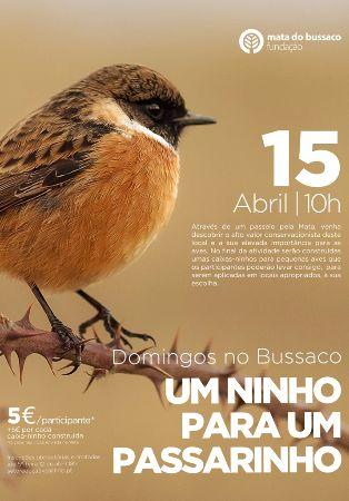 Domingos no Bussaco - Um ninho para passarinho