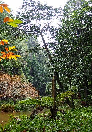 Domingos no Bussaco - A Floresta Revis(i)tada