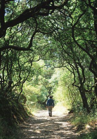 Caminhadas na Mata orientadas para grupos e famílias