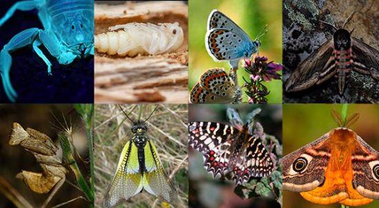 Sete novos insetos descobertos na Mata do Buçaco