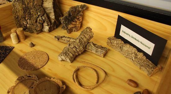 Centro de Interpretação Ambiental celebra Dia da floresta autóctone com atividades para todos