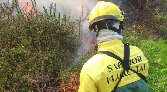 Câmara pretende recrutar Sapadores Florestais
