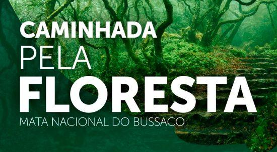 Caminhada pela Floresta Adiada
