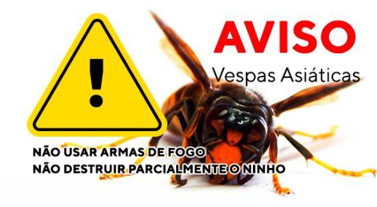 Atenção aos ninhos de vespa asiática