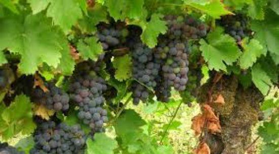 AD ELO abre candidaturas para apoio à aquisição de capacidade de armazenagem no setor do vinho