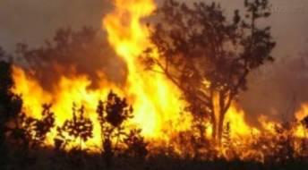 Ver Cuidados a ter com queimas e queimadas - ANPC