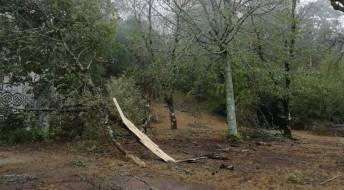 Ver Levantamento de danos agrícolas provocados pela tempestade Leslie
