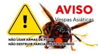 Ver Atenção aos ninhos de vespa asiática