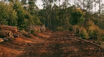Ver Defesa da floresta contra incêndios: aviso sobre limpeza de terrenos