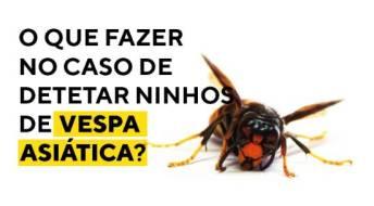 Ver Ninhos de vespa asiática? Contacte o Município ou a Junta de Freguesia