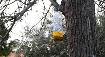 Câmara recebe apoio para combater vespa velutina