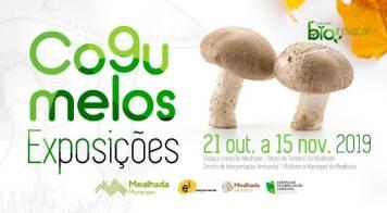 Exposições sobre cogumelos integram ciclo BioInovação