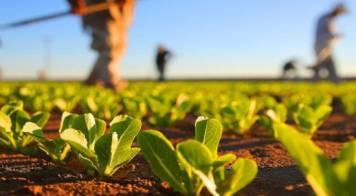 AD ELO abre concurso para apoio a agricultura local