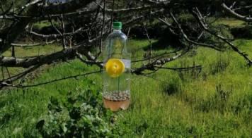 Mealhada reforça combate à vespa asiática